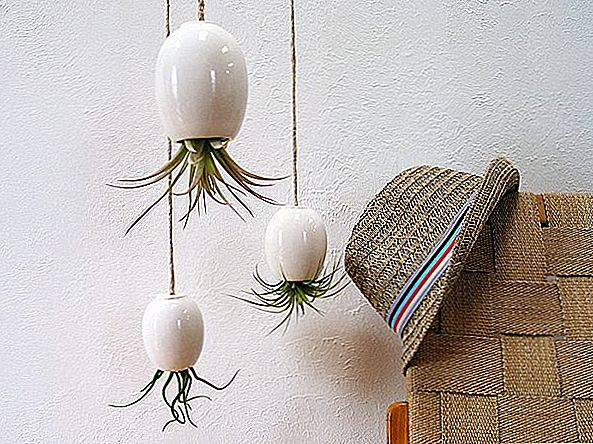 Hanging Air plant Pods Michael McDowell