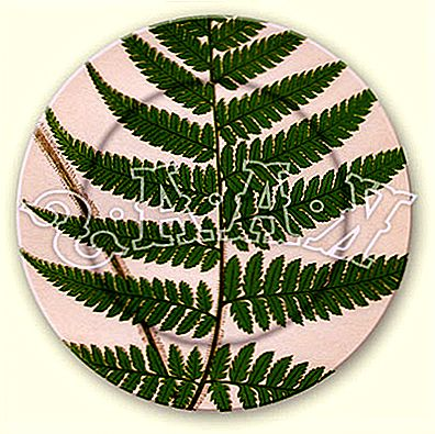 Kaas Glassworks Fern Plates
